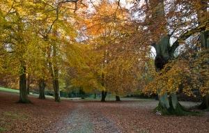 141112_Track to Arboretum 14 Nov_001
