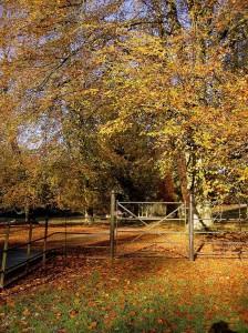 West Dean Arboretum in Autumn