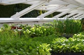 RHS National Gardening Week2015