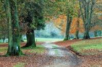 Autumn walks through the arboretum