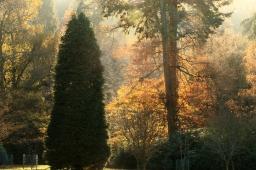 West Dean Gardens backlit trees