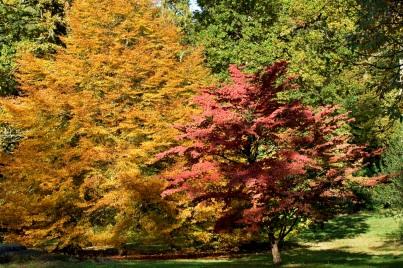 West Dean Gardens, Cornus Kousa, Chinensis and Fagus, Sylvatica 'Heterophylla'